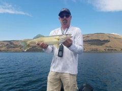 Another walleye