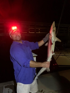 Black Tip Shark (i think)