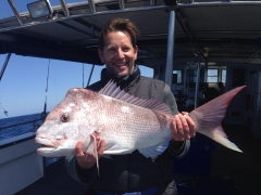 Pink Snapper