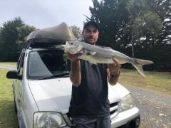 Nice Kahawai from Motunau in New Zealand