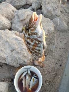 sharri fish