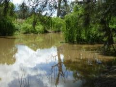 Cudgegong River