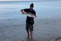 Another Golden Bay Kingfish caught in the shallows