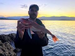 Nice big red gurnard - rock fishing