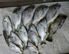 Pakistani lovely Bream local name is Phukkiya