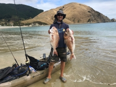 snapper time at cable bay