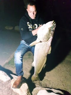 Jewfish