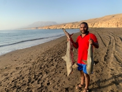 Black tip Shark 17kg & 9 kg