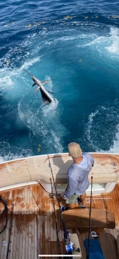 Corona Free Sailfish