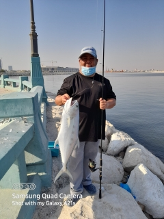 Queen Fish in Dammam Corniche