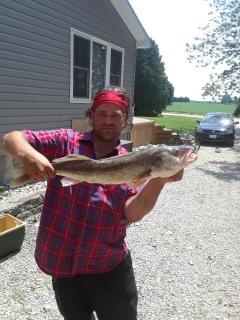 Big ol' walleye