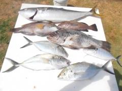 Mixed bag. Trevally Kingfish, Jewfish, Baldchin Groper, Blackarse.