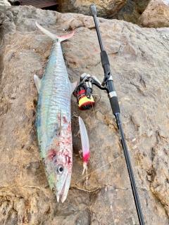 Spanish Mackerel #AbuDhabifishing
