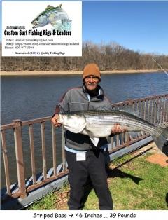 Spring Striped Base ... Delaware River Spawning Season